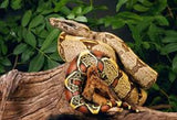 AVAILABLE IN STORE: Reptile Habitats, Food, Supplements & Accessories