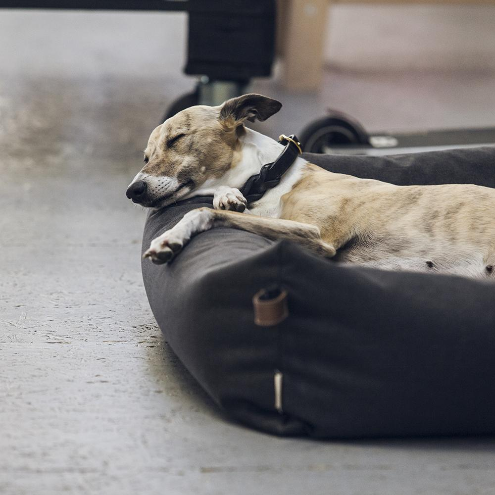 Dog Bed Sleepy Waterproof