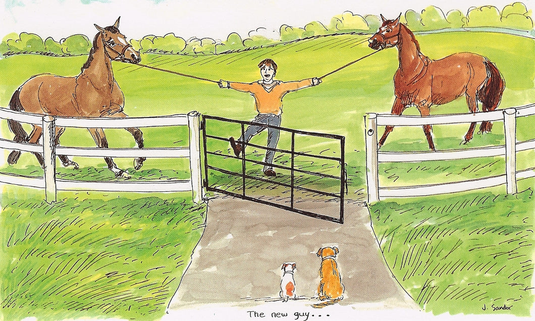 The New Guy - Turning Out Two Horses At A Time Can Be Hazardous<br>Note Card #49