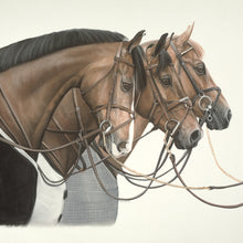 Horse Portrait Note Card Collection