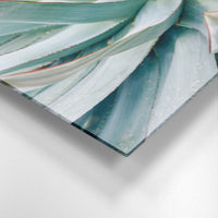 AGAVE Art on Acrylic By Anne Hudec