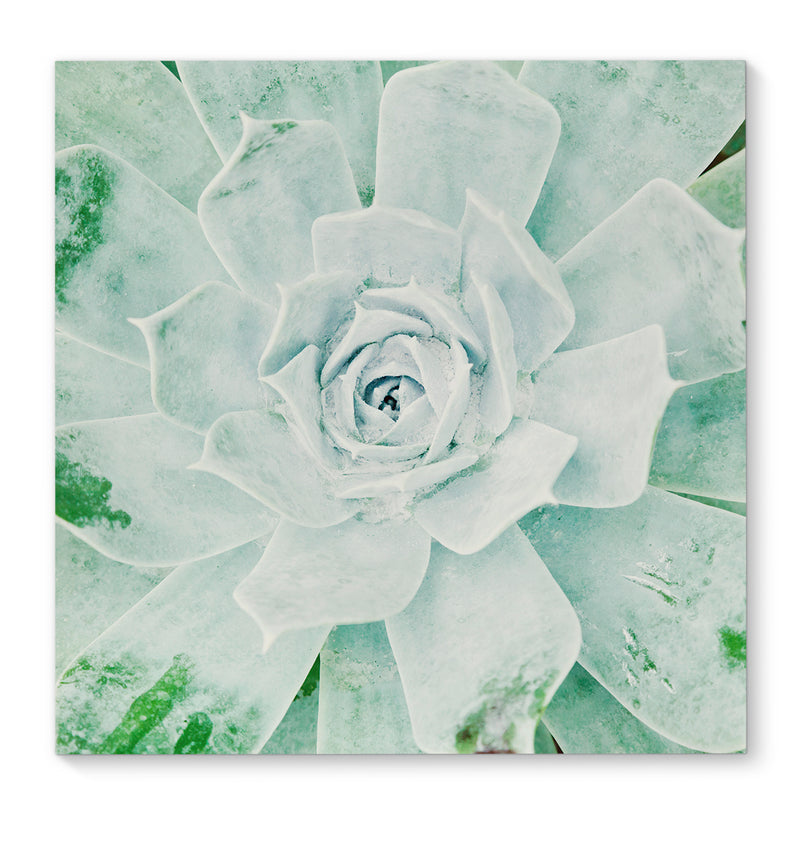 GREEN ROSE Canvas Art By Terri Ellis