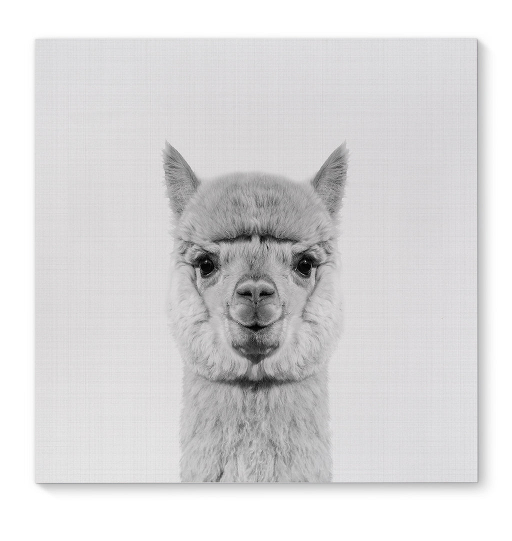 ALPACA Canvas Art By Vivid Atelier