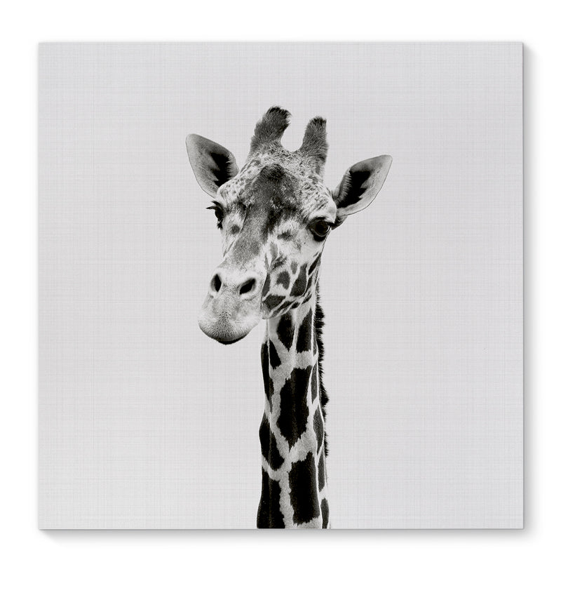 GIRAFFE Canvas Art By Vivid Atelier