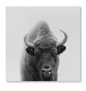 BUFFALO Canvas Art By Vivid Atelier