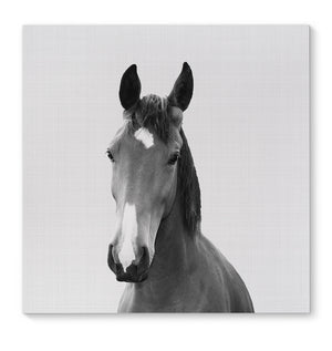 HORSE Canvas Art By Vivid Atelier