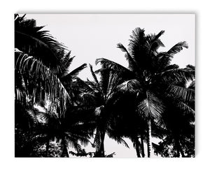 PALM TREES Canvas Art By Fabrizio Musa