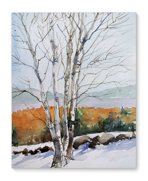 BIRCH TREE Canvas Art By Jayne Conte