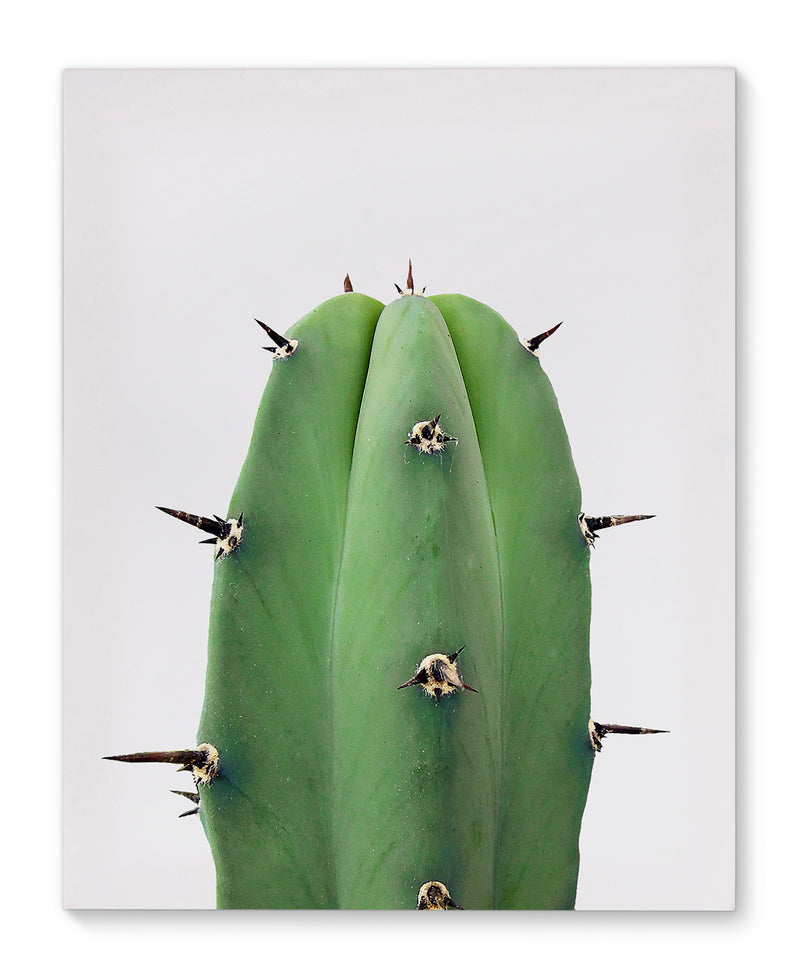 SINGLE CACTUS Canvas Art By Vivid Atelier