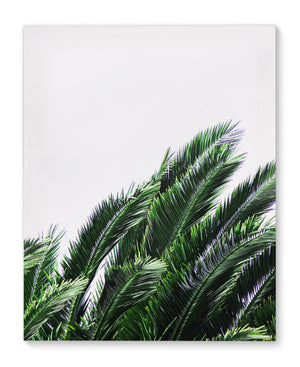 PALM GREENS Canvas Art By Vivid Atelier
