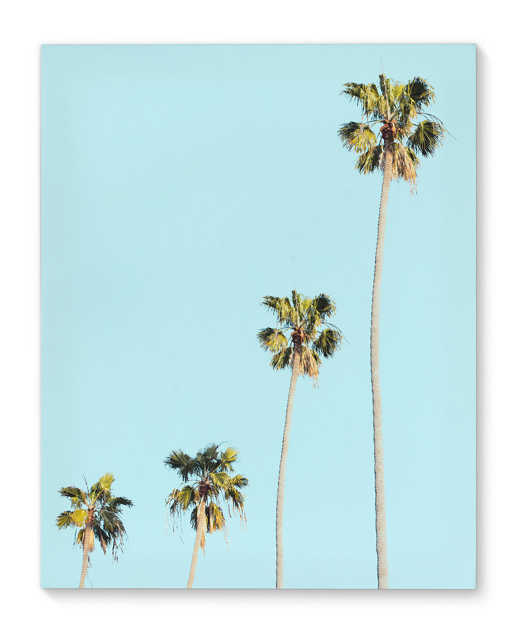 FOUR PALMS Canvas Art By Vivid Atelier