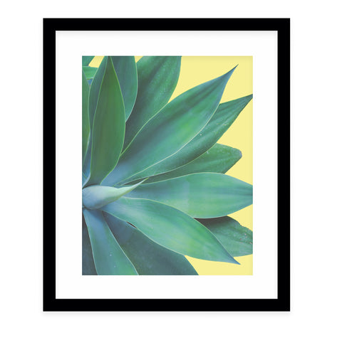 AGAVE COLOR POP Framed Giclee Print With Mat By Ann Hudec