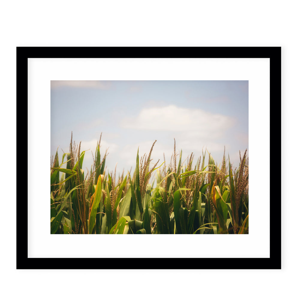 FIELDS OF GOLD & GREEN Framed Giclee Print With Mat By Ann Hudec