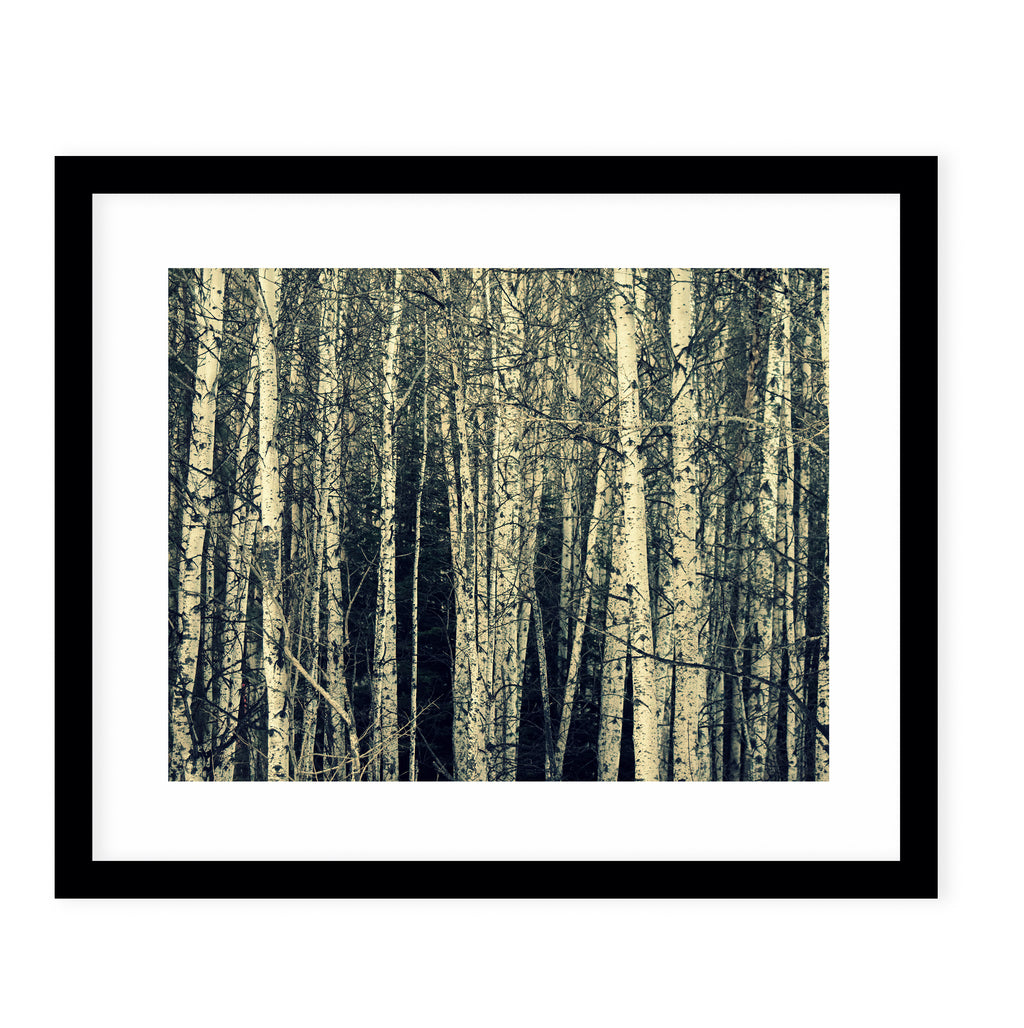 BIRCH Framed Giclee Print With Mat By Robin Delean
