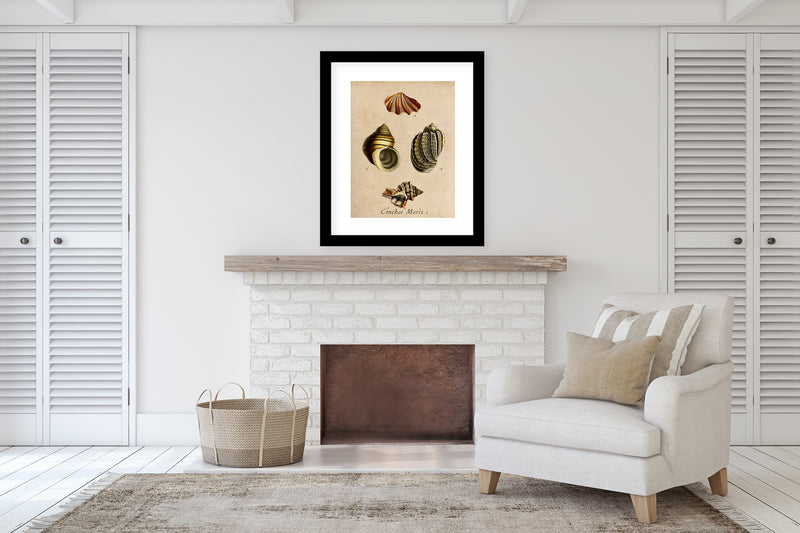 SHELLS VINTAGE TWO Framed Giclee Print With Mat By Terri Ellis