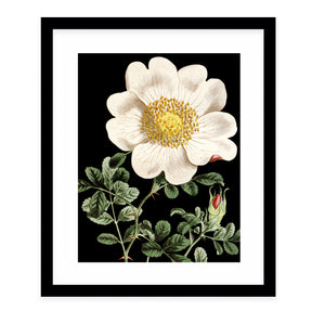 FLOWER TWO BLACK Framed Giclee Print With Mat By Terri Ellis