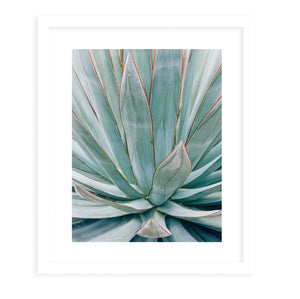 AGAVE Framed Giclee Print With Mat By Ann Hudec