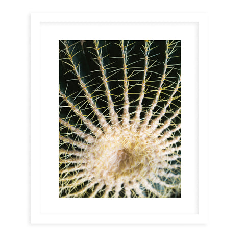 BARREL CACTUS Framed Giclee Print With Mat By Ann Hudec
