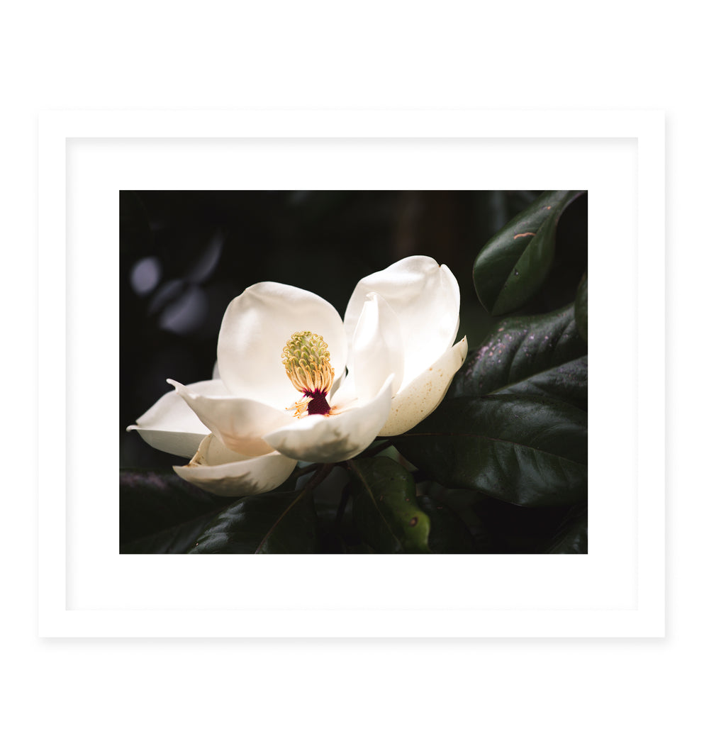 MAGNOLIA Framed Giclee Print With Mat By Ann Hudec