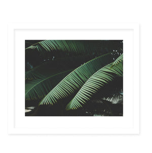 NIGHT IN THE TROPICS Framed Giclee Print With Mat By Ann Hudec