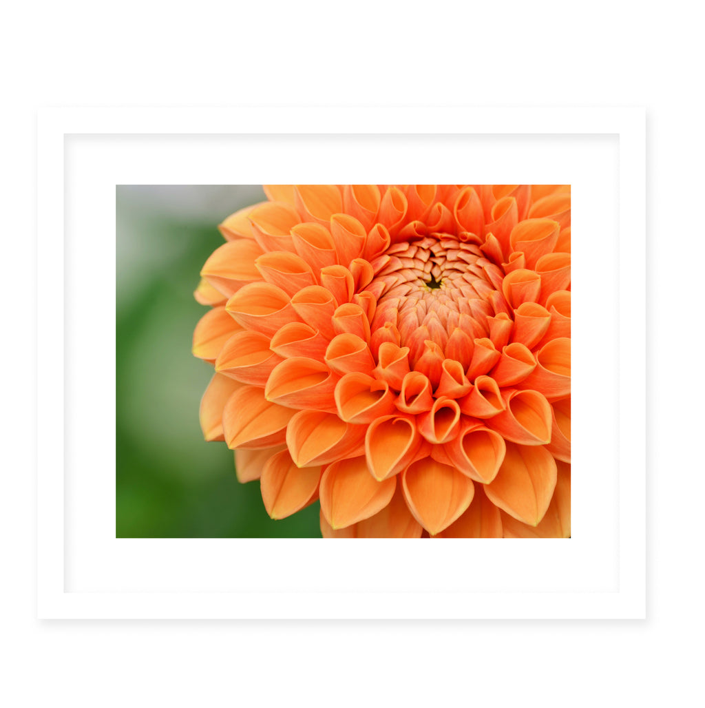 BLOOM Framed Giclee Print With Mat By Robin Delean
