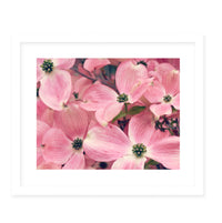 FLORAL Framed Giclee Print With Mat By Robin Delean
