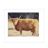 HIGHLAND Framed Giclee Print With Mat By Robin Delean