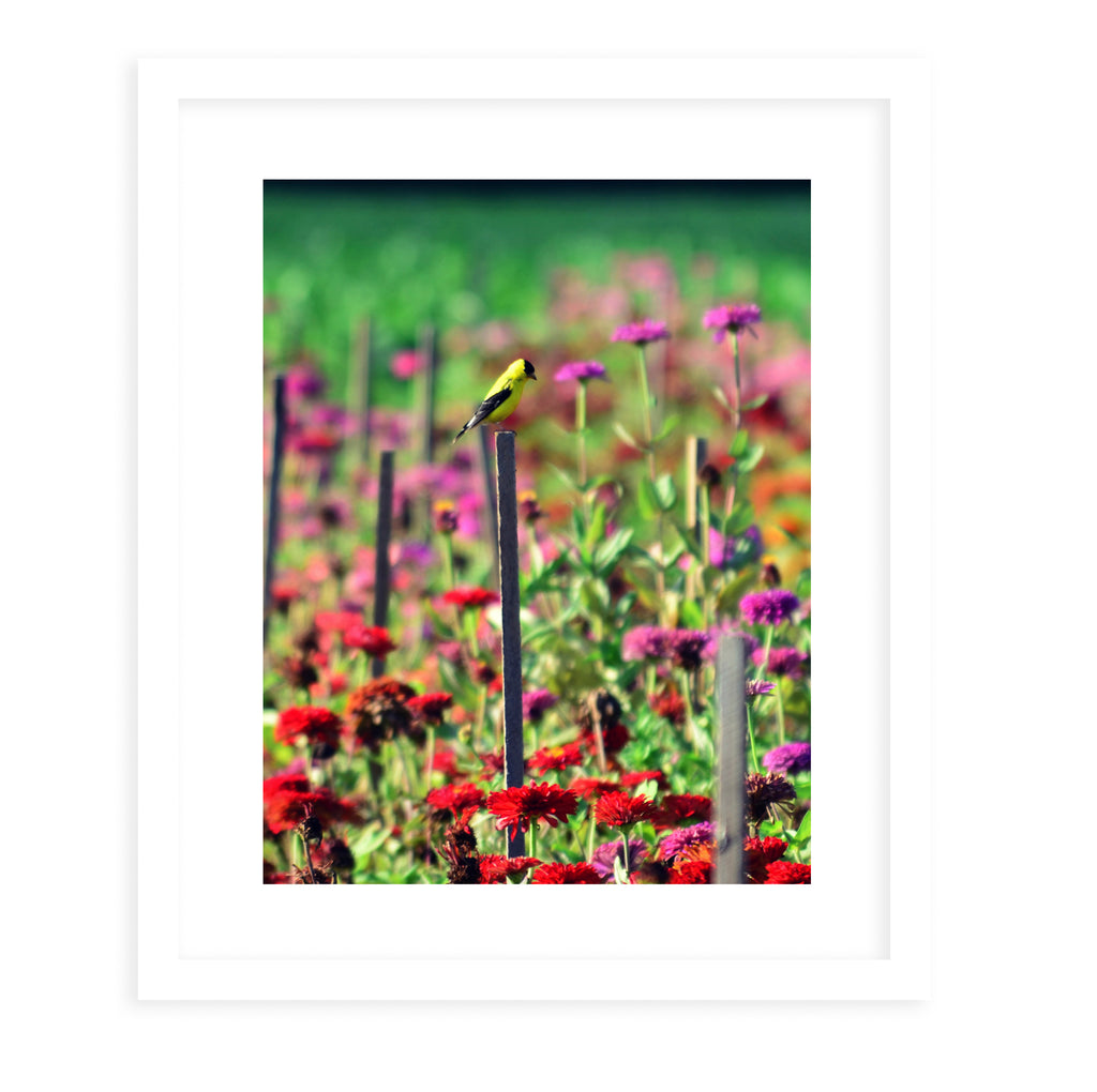 LIVE IN THE SUNSHINE Framed Giclee Print With Mat By Robin Delean