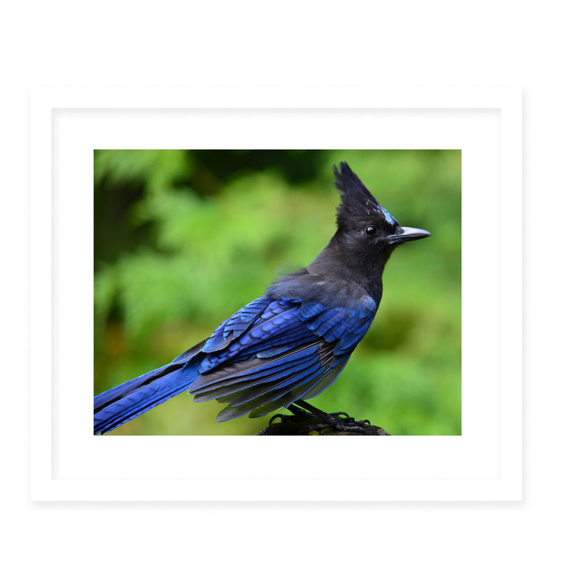 STELLERJAY Framed Giclee Print With Mat By Robin Delean