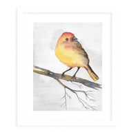 YELLOW BIRD Framed Giclee Print With Mat By Jayne Conte