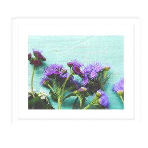 AGERATUM Framed Print With Mat By Olivia St.Claire