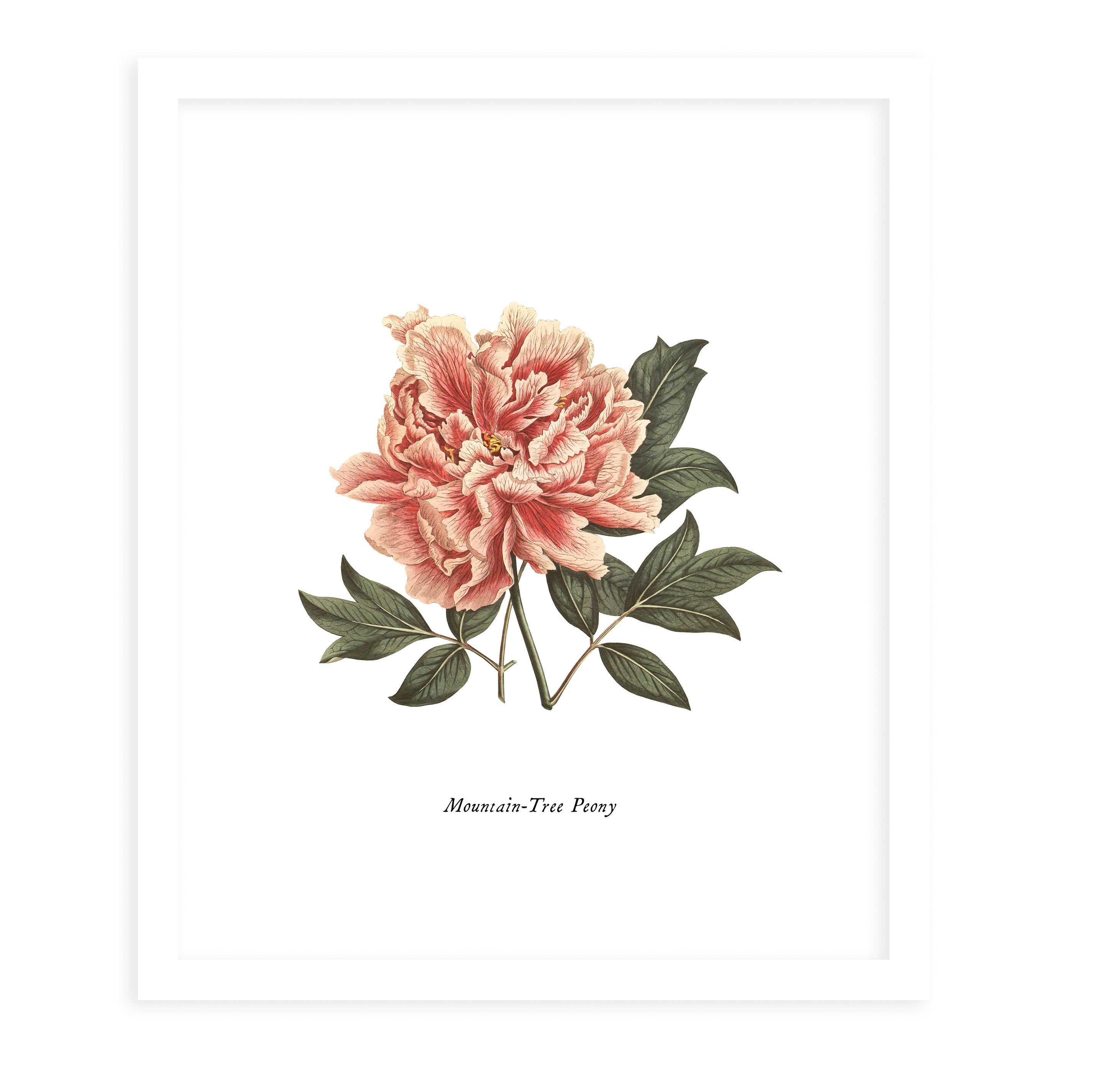 BOTANICAL FOUR Framed Giclee Print With Mat By Terri Ellis