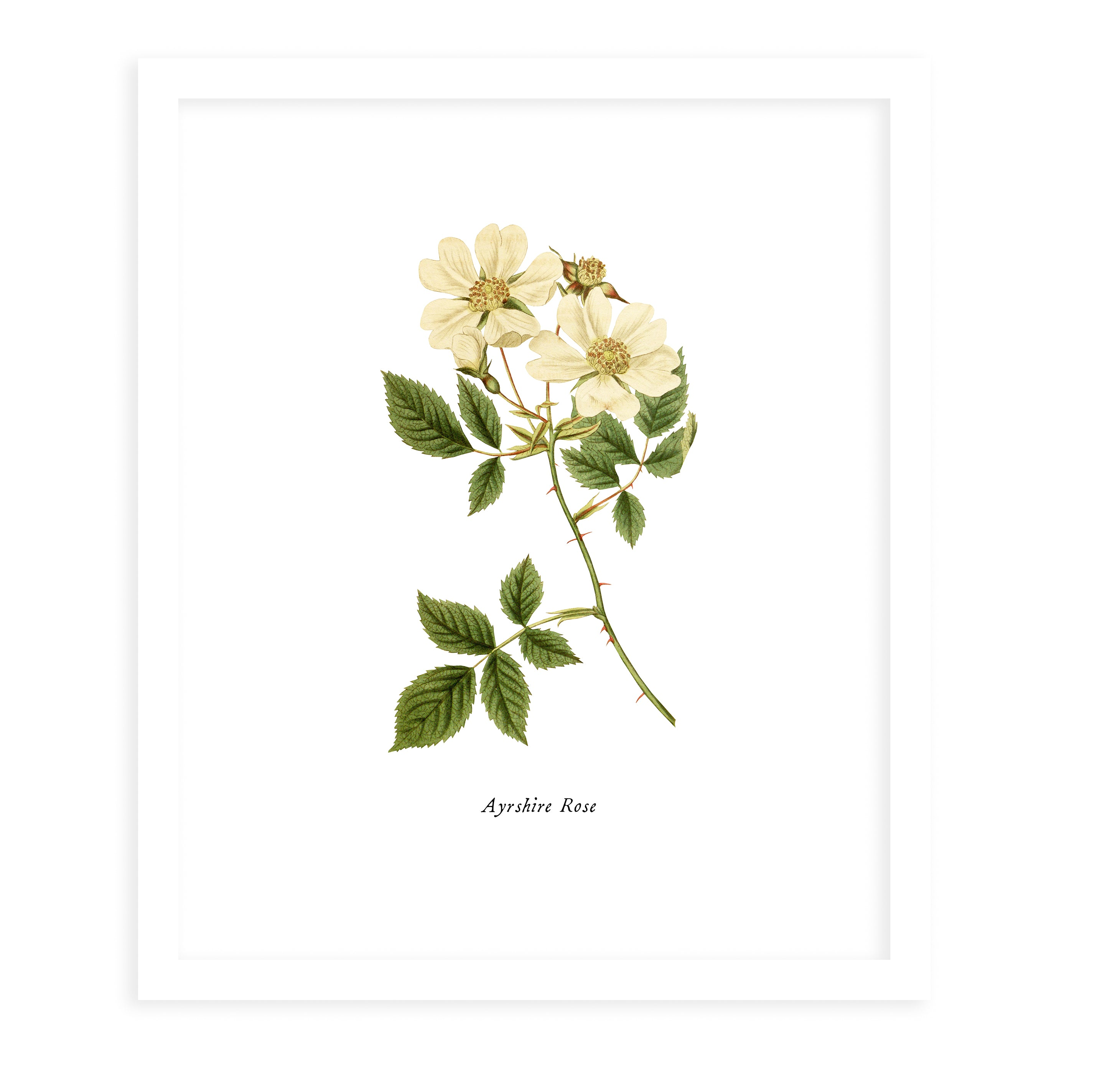 BOTANICAL ONE Framed Giclee Print With Mat By Terri Ellis