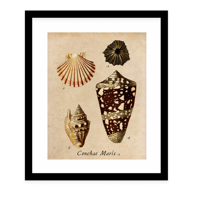 SHELLS VINTAGE Framed Giclee Print With Mat By Terri Ellis