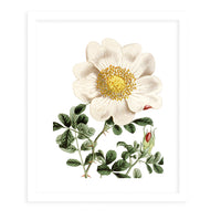 FLOWER TWO WHITE Framed Giclee Print With Mat By Terri Ellis