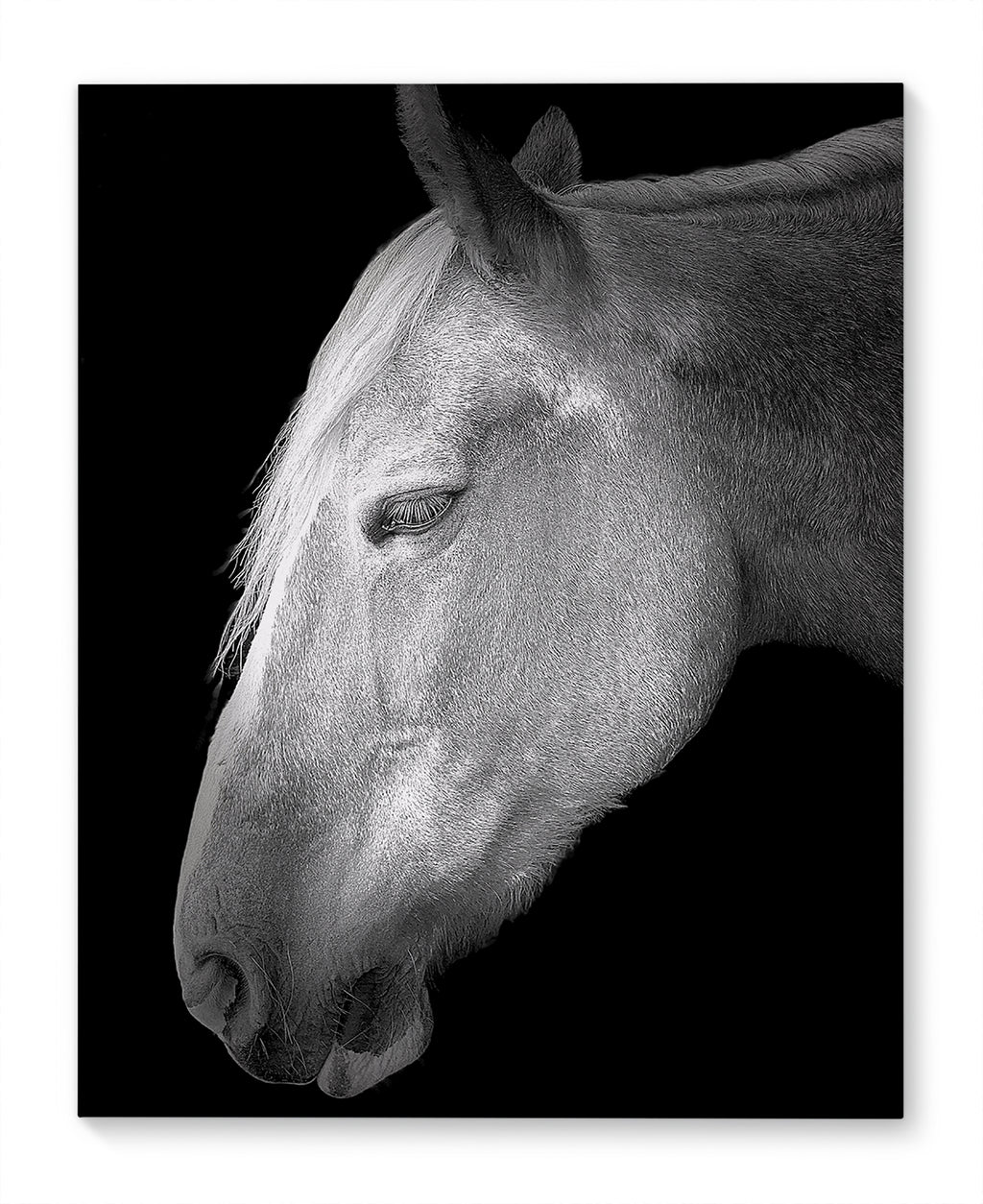 BELGIAN HORSE Canvas Art By Farmhouse Chronicles