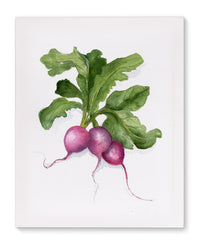 RADISHES Canvas Art By Jayne Conte