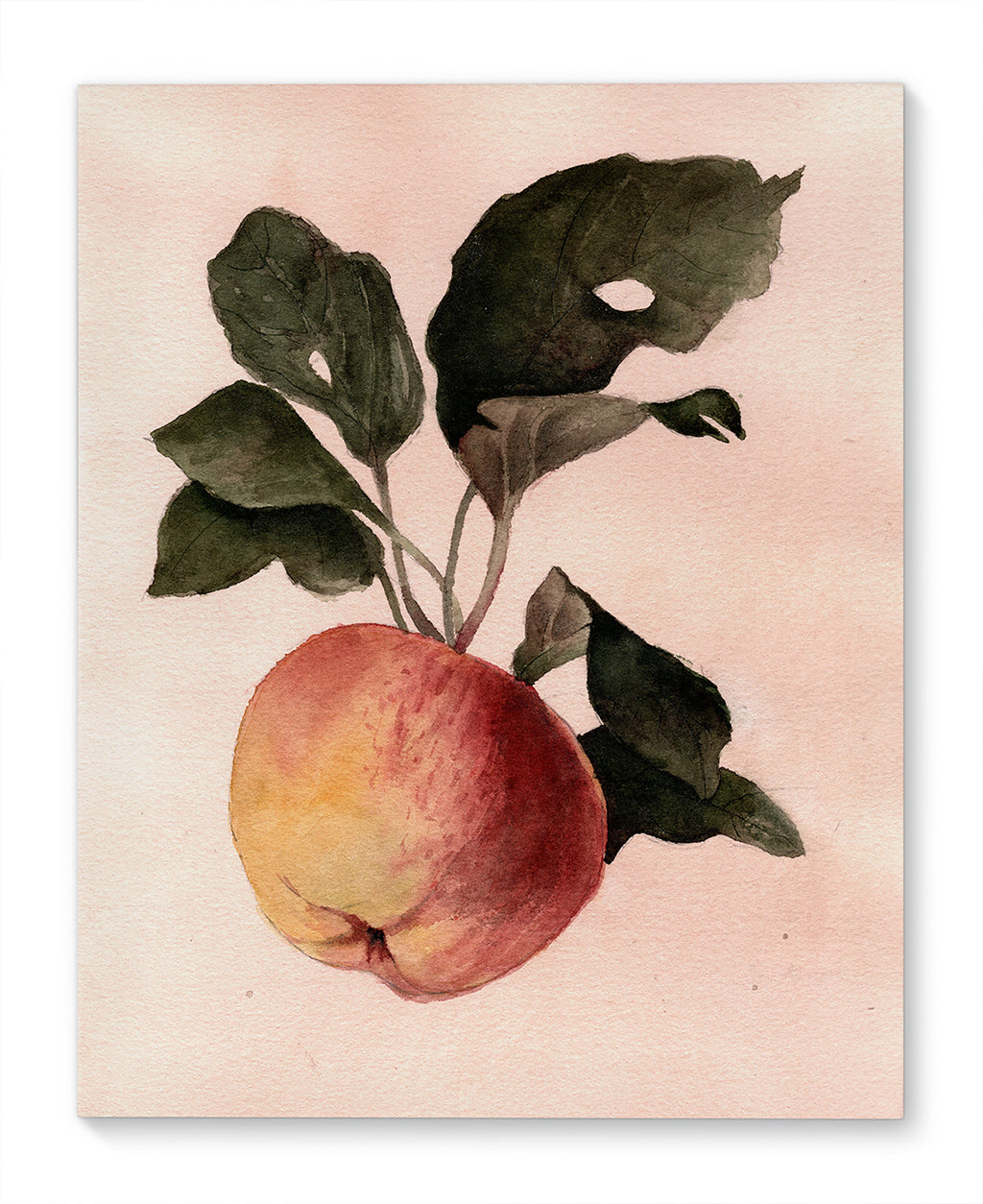 APPLE Canvas Art By Jayne Conte