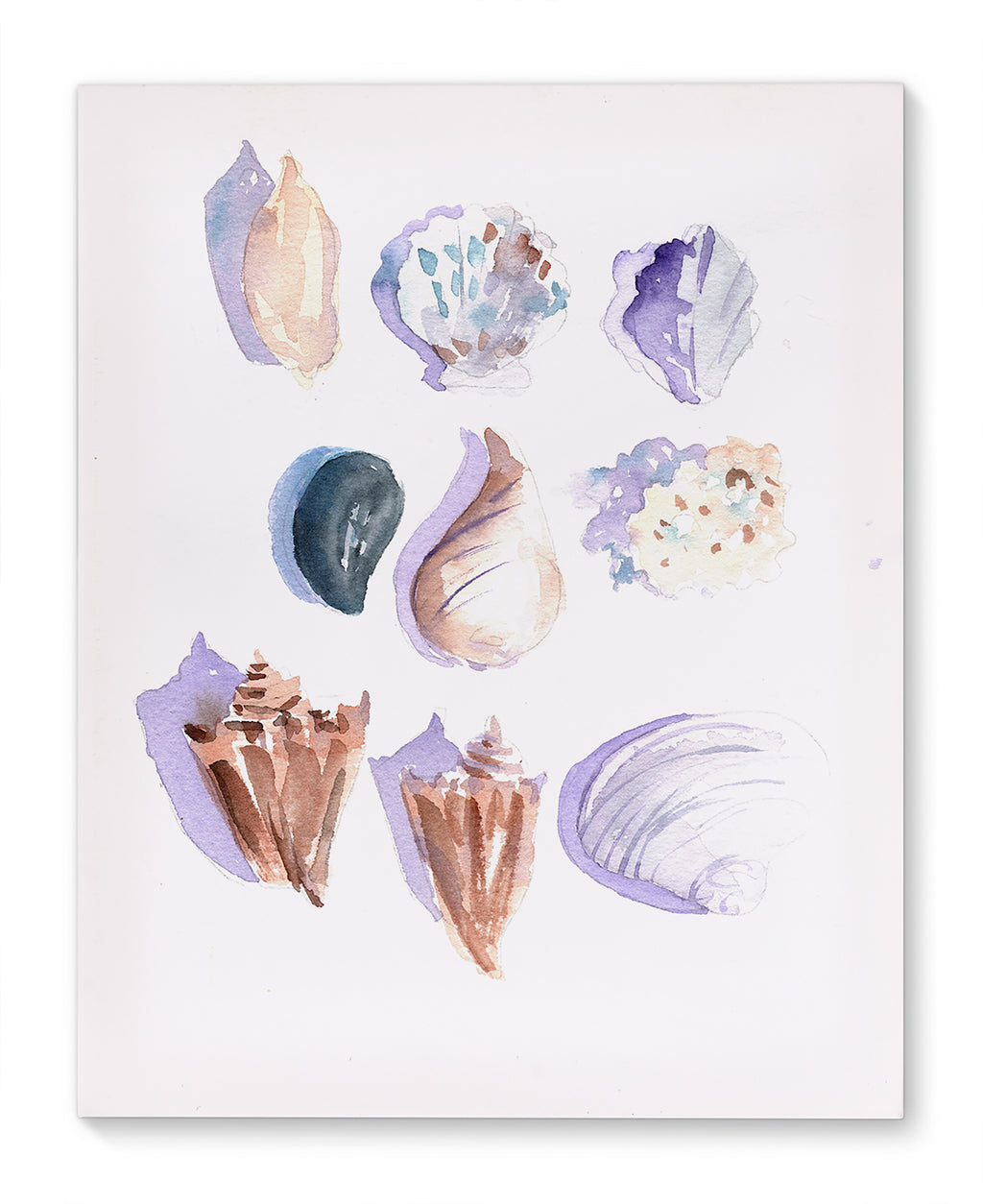 SEA SHELLS Canvas Art By Jayne Conte