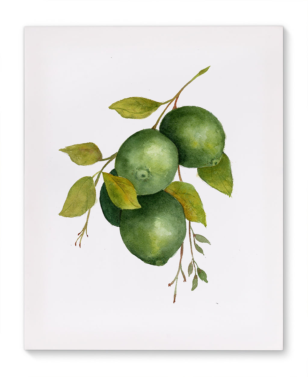 HANGING LIMES Canvas Art By Jayne Conte