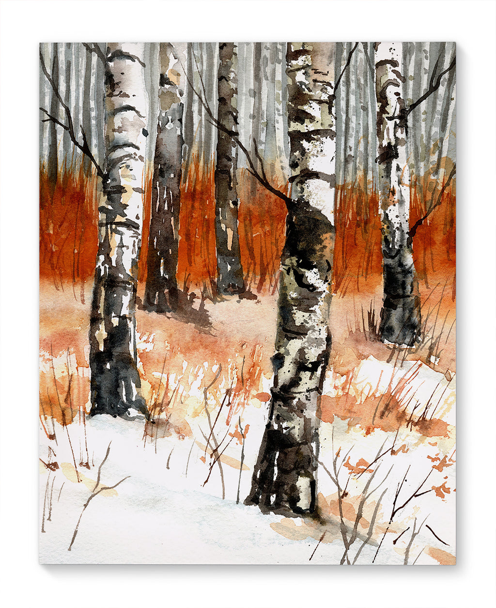FOREST OF BIRCH TREES Canvas Art By Jayne Conte