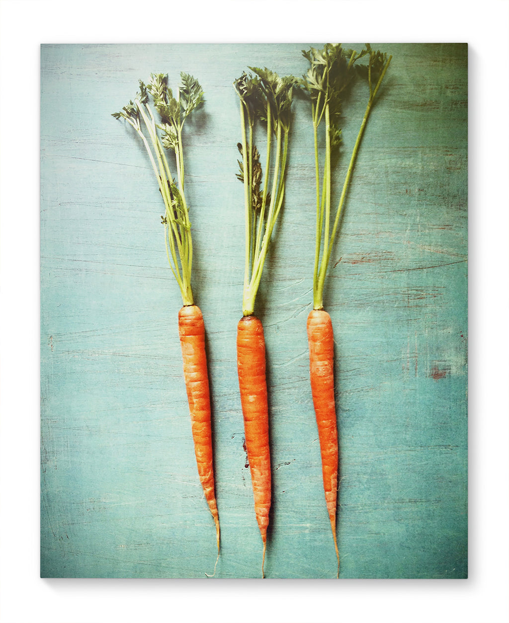 THREE LITTLE CARROTS Canvas Ar By Olivia St. Claire