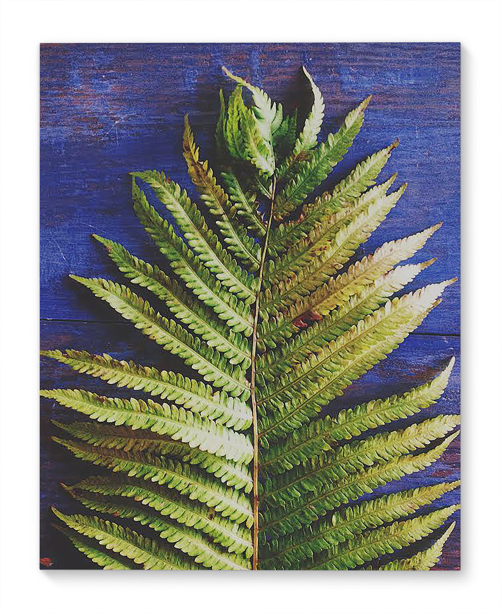 FERN Canvas Ar By Olivia St. Claire