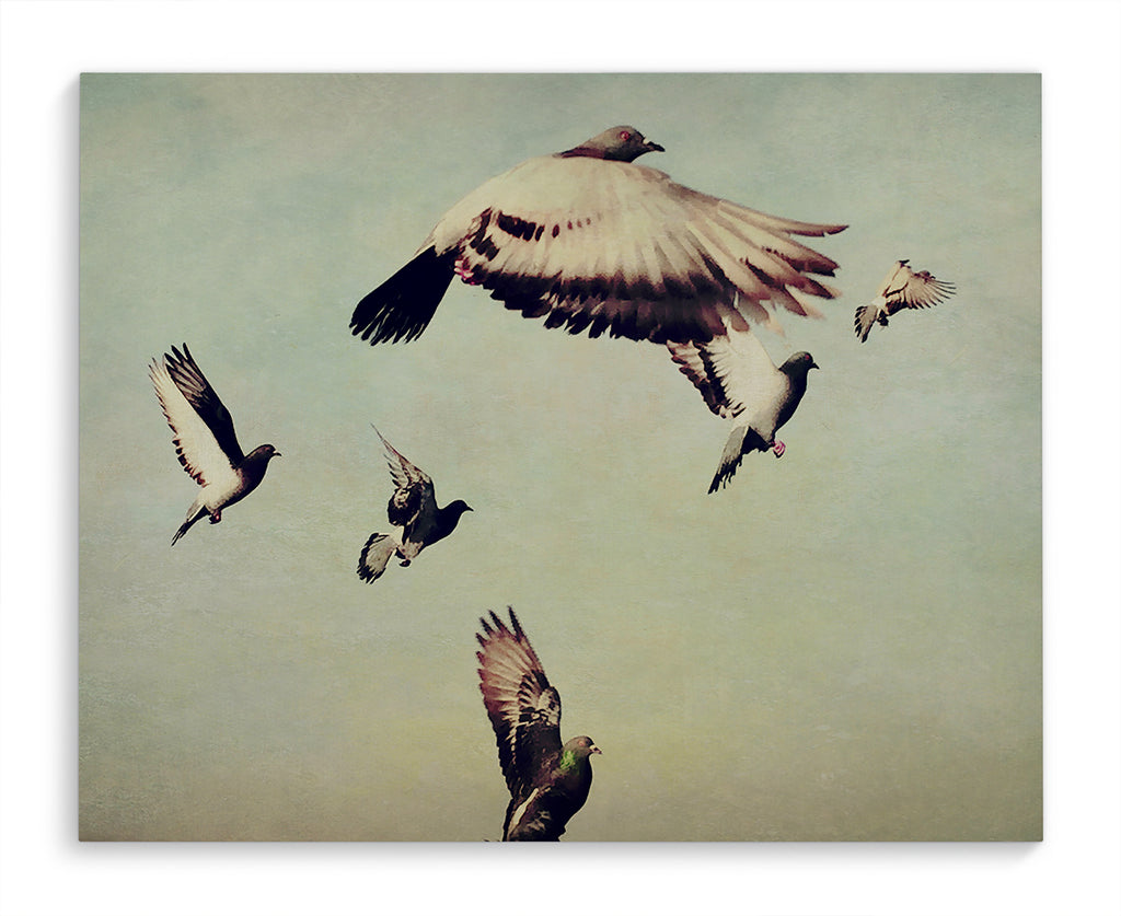 FLIGHT OF THE PIGEONS Canvas Ar By Olivia St. Claire