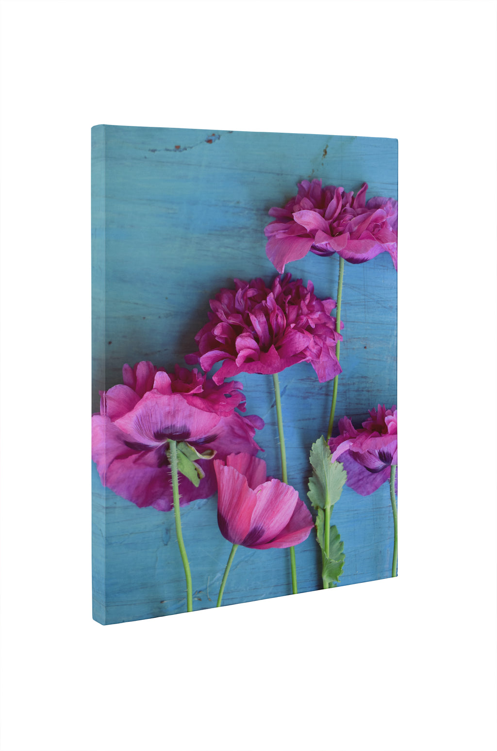 POPPIES Canvas Ar By Olivia St. Claire