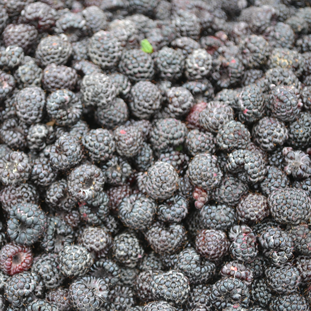 Fresh Black Raspberries