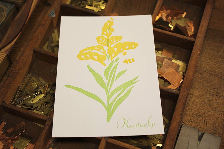 Kentucky State Flower Postcard Goldenrod