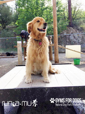 Training Platform (L/X)- Poly Wood Grain - dog park products