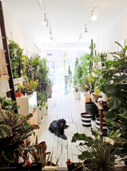 My Favourite House Plant Stores in Toronto