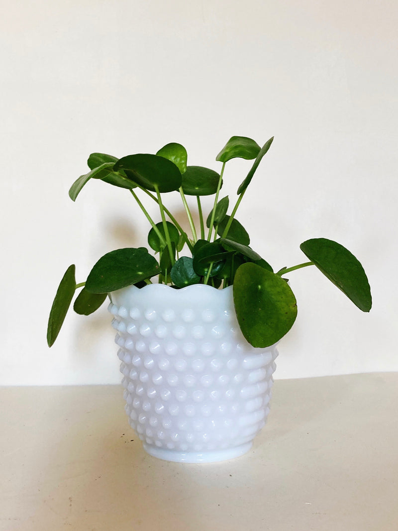Vintage milk glass planter with scalloped edges